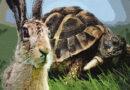 Черепаха и заяц — кто берет большую прибыль